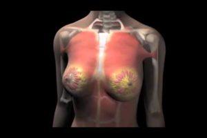 Анатомия молочных железы
